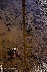 Reflection Power (hoosierrailfan1951) Tags: reflection water bluesky pole powerlines rainpuddle