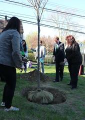 Dixson Tree Planting Ceremony (elmsdweb) Tags: williams web alvarado 1516 mayorwilliams treemendous dixson olender byflorio