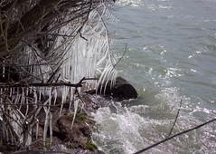 Port Dalhousie (sloansquared) Tags: lake ontario beach waterfront wildlife niagara lakeshore stcatharines lakeontario icicles portdalhousie niagararegion
