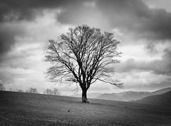 Tree (oliko2) Tags: sky mountain tree nature monochrome clouds germany landscape blackwhite outdoor crow blackforest schauinsland tamron70300 hofsgrund nikond7100