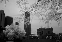 DSC01265 (zkj102) Tags: city tree rain ir 3d cityscape shanghai stereo infrared    htconex