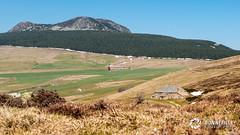 Mont Mzenc (Nito43) Tags: plateau loire printemps ferme ardche hauteloire mzenc