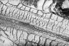 Wood (Larah McElroy) Tags: pictures wood blackandwhite abstract macro photography board rustic picture photograph mcelroy larah larahmcelroy