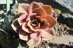 Pretty Plant (rreyn92) Tags: lake plant colour detail macro pretty district soil rockery detailed resistant