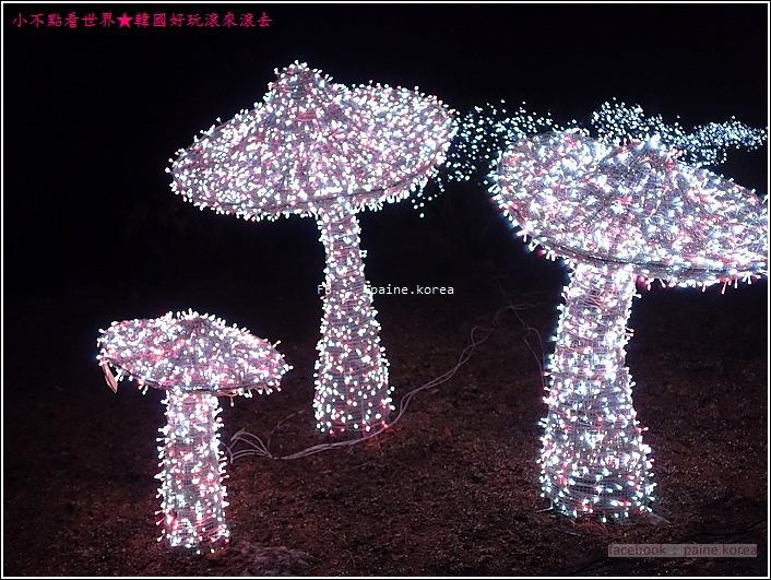 晨靜樹木園 五色星光庭園展 (28).JPG