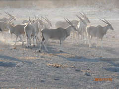 Africa 2015 720 (Absolute Africa 17/09/2015 Overlanding Tour) Tags: africa2015
