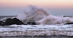 Usan Mains, Montrose (garnier1981) Tags: coast scotland waves angus cpl usan monstrose