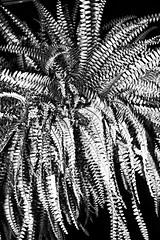 R0021888 (kenny_nhl) Tags: street light shadow blackandwhite bw black monochrome dark photo blackwhite shot 28mm streetphotography surreal scene snap explore malaysia visual ricoh provoke grd explored streephotography grd4 grdiv