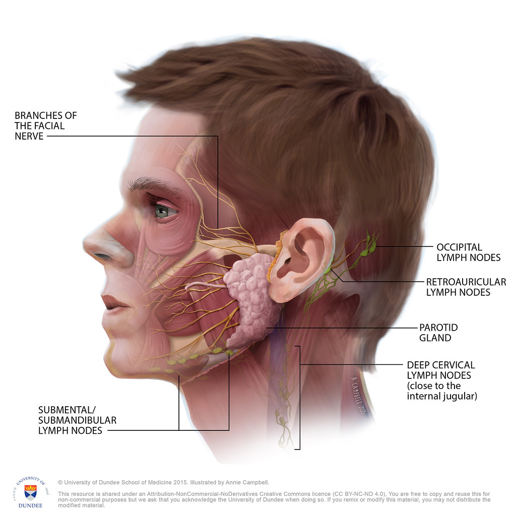 Would Adult in lymphadenopathy occipital something