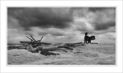 Poodle and Sticks (caralan393) Tags: sky bw storm beach sticks poodle drama