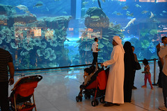 UAE - 2015-0068 (MacClure) Tags: fish aquarium dubai uae unitedarabemirates dubaimall