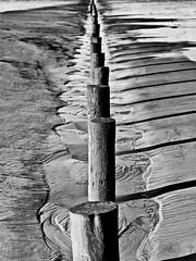 Burnham On Sea (kernowrules) Tags: wood sea england bw mono sand pattern ripple stump groyne burnham canon50d kernowrules