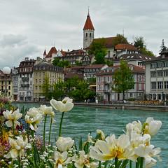 Thun (duqueros) Tags: city flower river square schweiz switzerland suisse blumen stadt thun svizzera fluss altstadt aare kantonbern duqueiros