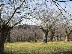 BOSCO / WOOD (my_secret_window81) Tags: autumn leaves foglie landscapes woods campo chestnut fiore albero autunno paesaggio appennino bosco pianta castagne ciliegio maroni allaperto fioritura castagni distesa erbosa