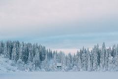 Oslo Vinterpark (bearepresa) Tags: canon oslo norway vinterpark snow landscape paisaje winter travel explore white monochrome bestshot2016 yourbestshot