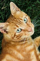 Gato (Gaston de la Llana) Tags: travel pet naturaleza mountain nature argentina cat eyes wine roadtrip viajes mendoza vino montaas cateye