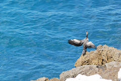 Croatian Birds (vs1k. 1 000 000 visits, Thanks so much !) Tags: sea birds croatia adriatic