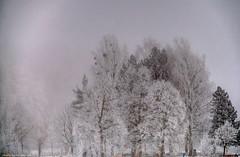 Nebelwelten - Eiskristallwelten (fast ein schwarz-weiß Bild) -- Fog worlds - Ice Crystal Worlds (almost a black and white image) (Polybert49) Tags: fog germany bayern deutschland bavaria nebel oberbayern alemania bäume allemagne baum hdr gemany germania duitsland fused bundesrepublikdeutschland germering jhp almanya niemcy tonemapping federalrepublicofgermany германия мюнхен alemanne topazsoftware germeringersee bavière γερμανία républiquefédéraledallemagne germanujo heribertpohl polybert ドイツ連邦共和国 feuchtebiotopparsberg lakegermering