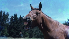 """I said smile not laugh crazy"" (Lim SK) Tags: horse laugh"