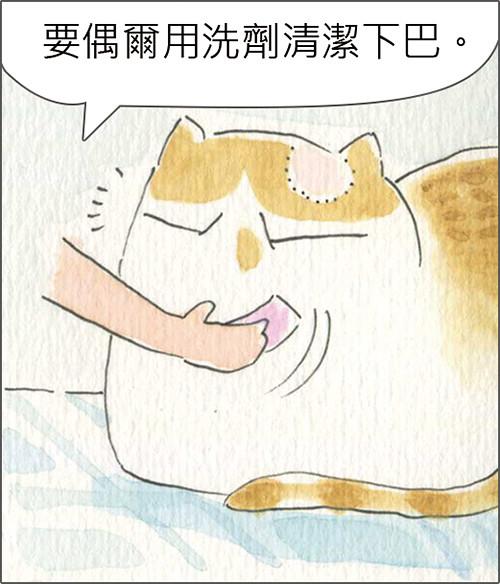 家裡來了一隻貓 貓也有粉刺