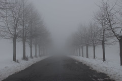 Misty way (M. Drago) Tags: road street new trees winter sky cloud white mist snow black streets tree art ice nature misty fog clouds canon dark way landscape outside eos grey ngc foggy creepy 24mm roads february 100d
