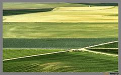 Cruce de caminos. Crossroad (AGL PHOTO) Tags: espaa de valladolid caminos cultivos crossroad abstracto cereales cruce uruea