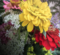 Zinnia Bouquet (mahar15) Tags: flowers plant flower nature floral outdoors blooms zinnia floralarrangement