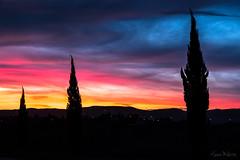 Van Gogh Style (Sara Mulatto) Tags: trees sunset tree alberi tramonto tuscany toscana albero cypresses cipressi