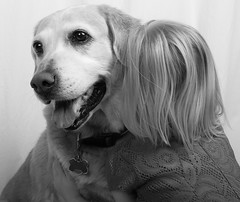 Dog Hugs (Missi Gregorius) Tags: love dogs kids photography blackwhite hugs buddys