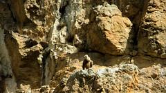 Avvoltoio (Guly_Julien) Tags: espaa parco travelling bird nature de spain tour natural explorer natura canyon prey foz spagna birdofprey reserva gola navarra rapaz predatory rapace gole naturale riserva lumbier rapaces rapaci avvoltoio