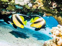 IMG_0247 (eye[4]eye) Tags: egypt diving gypten tauchen bluewaves