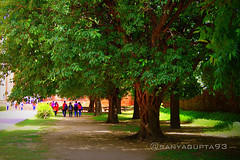 Beautiful Greenery (sanyagupta09) Tags: park new city travel trees india tree green nature garden photography niceshot view delhi sony exploring parks greenery photooftheday picoftheday naturelover capturing travelphotography sonyalpha sonydslr travelphotographer