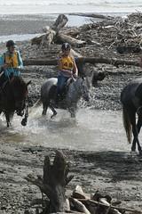 IMG_EOS 7D Mark II201604030569 (David F-I) Tags: horse equestrian horseback horseriding trailriding trailride ctr tehapua watrc wellingtonareatrailridingclub competitivetrailriding sporthorse equestriansport competitivetrailride april2016 tehapua2016 tehapuaapril2016 watrctehapuaapril2016
