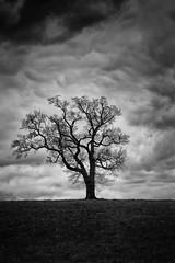 arbre solitaire N&B 2500px (christophe surman) Tags: blackandwhite tree blackwhite alone noiretblanc arbres minimalism arbre minimalist solitaire noirblanc minimaliste minimalisme