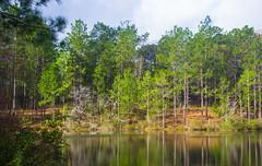 DSC_2750 (Bob Carlson) Tags: park state falling waters
