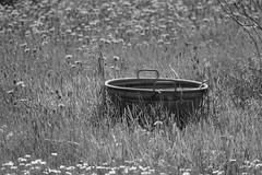 a tub on the meadow (1) (BZK2011) Tags: leica blackandwhite meadow wiese tub wanne vlux schwarzweis