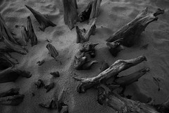 Interre (SimonTHGolfer) Tags: old england blackandwhite tree beach nature monochrome contrast mono suffolk sand nikon upsidedown time roots stump worn d750 f4 24120mm covehithe