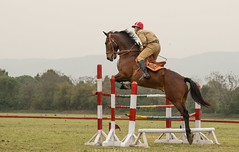 Leap (imtiazchaudhry) Tags: horse train contest rider equestrian gallop showjumping hooves