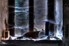 Huit pattes (urban requiem) Tags: old urban abandoned window caf lost cafe decay g cobweb luxembourg exploration derelict fentre hdr verlassen urbex abandonn letzebuerg verlaten 600d toiles daraignes toilesdaraignes cafeg cafg