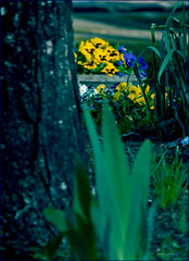 (Cliff Michaels) Tags: flowers photoshop nikon tennessee maryville d5000 pse9