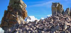 DSC02450 (peng_tim1) Tags: penguin antarctica pinguin antarctic antarktis anartikis