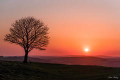 Cissbury sunset (fieldino34) Tags: wood sunset red orange colour tree silhouette sussex evening worthing nikon glow view westsussex dusk hills glowing lonely nationaltrust southdowns cissbury cissburyring nikonphotography nikond750
