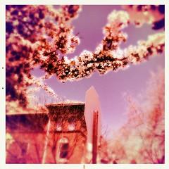 47th and Hazel (karenchristine552) Tags: cameraphone trees usa philadelphia spring westphiladelphia pennsylvania pa philly westphilly universitycity iphone cedarpark mobilephotography hipstamatic