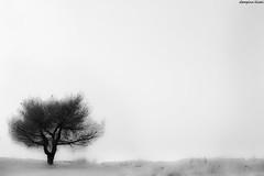 silence (Georgina ) Tags: blackandwhite tree monochrome bare greece bleak minimalism sanddune desolate