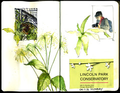 041116_LincolnPKConservatory (Barbara Weeks) Tags: urban watercolor paper watercolorjournaling mondaysketches urbansketcherschicago