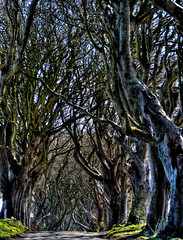 dark hedges69fh (seanfderry-studenna) Tags: road county ireland sunset irish mist plant tree nature forest sunrise dark landscape alley outdoor g branches tourist northern beech hedges antrim armoy dramatictonemapped