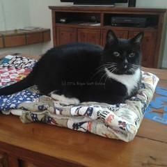 RIP Mitty (tat2dqltr) Tags: cat tuxedocat goodbye mitty notmycat