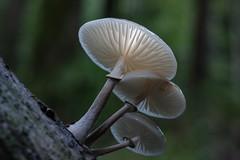 give me a light (stefan.lafontaine) Tags: mushroom deutschland europe pilze saarbrcken