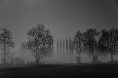 Bume bei Nacht und Nebel (Thomas Neuhaus) Tags: nebel nacht wiese bume vollmond herzogenbuchsee oberaargau vollmondnacht kaltermond kaltervollmond