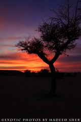 Acacia valley (C@MARADERIE) Tags: sunset orange color nature silhouette vertical landscape colorful nopeople riyadh saudiarabia acacia nuance edgeoftheworld saudia colorimage acaciavalley desertwilderness desertofarabia